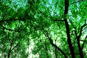 唯美森林 梦幻森林 仙境 背景视频下载37手机特效图片
