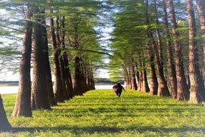 手机专用 树林美景草地3 剪映唯美风景背景视频手机特效图片