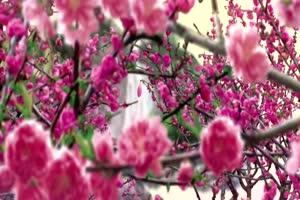 水墨 江南 国画 06 古风 唯美 视频背景素材免费下手机特效图片