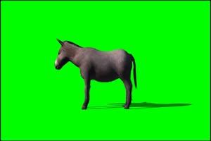 驴 蠢驴 绿屏抠像 特效素材 免费下载手机特效图片