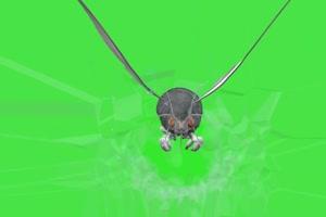 飞蛾虫子 动物绿幕视频素材下载 @特效牛绿幕素手机特效图片