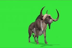 斗牛素材 绿幕抠像 特效素材 @特效牛手机特效图片