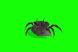 螃蟹  绿幕素材 抠像视频