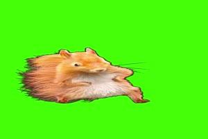 松鼠 老鼠 十分欠揍 跳舞 动物绿幕 抠像素材 正手机特效图片