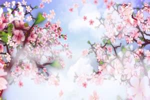 桃花盛开 音乐 背景素材绿布和绿幕视频抠像素材