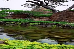免费手机专用 唯美鱼塘 池塘 美景视频素材50手机特效图片