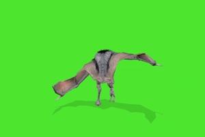 蝙蝠1 绿幕视频素材 特效抠像 绿布视频 飞鸟手机特效图片