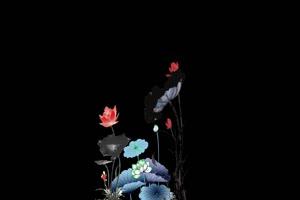 荷花荷叶3 莲花 抠像素材