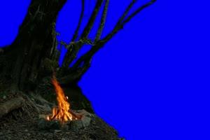 树 篝火 自然绿屏抠像素材手机特效图片