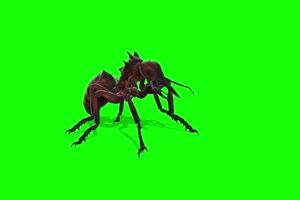 蚂蚁 特效牛 绿幕素材 抠像视频 后期特效素材手机特效图片