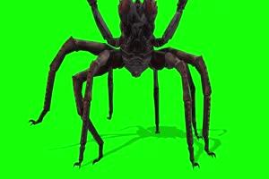 免费蜘蛛1 特效牛 绿幕素材 抠像视频 后期特效素手机特效图片