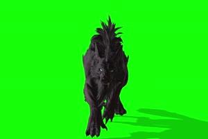 4K 怪兽狼1 绿幕素材 绿幕视频 动物绿幕下载1手机特效图片