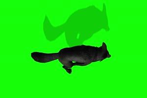 黑狼上面 4K绿幕 抠像视频素材 绿幕视频下载手机特效图片