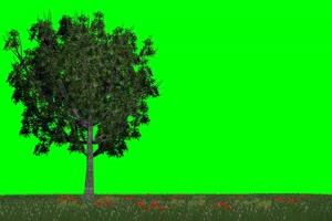 牧场草地大树木 绿幕视频免费下载 @特效牛 绿屏手机特效图片