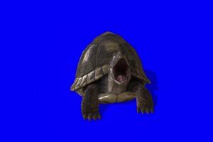 海龟 特效牛 绿幕素材 抠像视频 后期特效素材手机特效图片