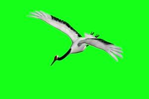 坐骑 仙鹤 飞鹤 飞鸟 白鹤 绿幕素材 绿幕视频 手机特效图片