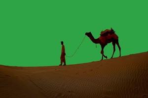 免费骆驼 绿幕视频 抠像视频下载手机特效图片