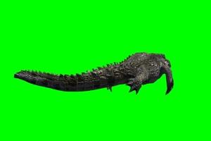 鳄鱼 7 绿屏抠像 特效素材
