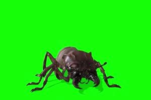 甲夹虫 特效牛 绿幕素材 抠像视频 后期特效素材手机特效图片