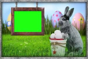 兔子相框 动物 Rabbit 绿屏抠像素材 巧影AE特效素手机特效图片