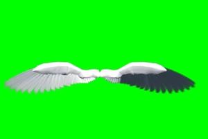 天使 翅膀 1 绿屏抠像 特效绿布和绿幕视频抠像素材