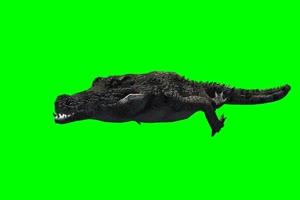 鳄鱼 5 绿屏抠像 特效素材 免费下载手机特效图片