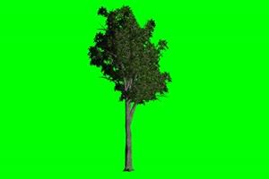 树木 树苗 2 绿幕视频免费下载 1手机特效图片