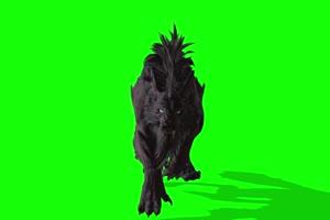 怪兽狼1 绿幕视频 绿幕素材 剪映抠像素材手机特效图片