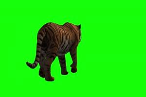 老虎后面 4K精品视频素材 绿幕视频下载手机特效图片