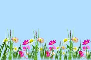 鲜花相框 花草素材 花瓣落