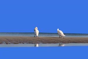 天鹅绿幕视频素材 动物绿幕 剪映特效素材 特效手机特效图片