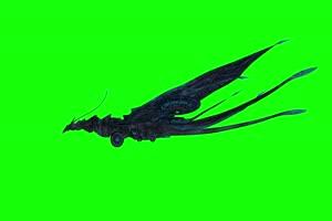 4K 蝴蝶精侧面 绿幕素材 绿幕视频 动物绿幕手机特效图片