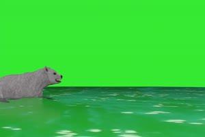 北极熊1 绿屏动物 特效视频 抠像视频 巧影ae素材手机特效图片