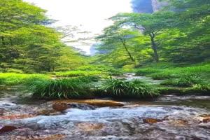 免费手机专用 唯美鱼塘 池塘 美景视频素材57手机特效图片