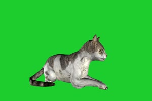 狸猫 绿屏动物 特效视频 抠像视频 巧影ae素材手机特效图片