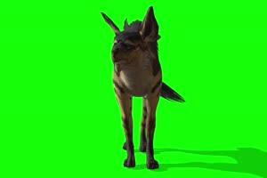 4K 鬣狗 绿幕素材 绿幕视频 动物绿幕下载手机特效图片