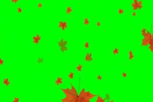 秋天落叶 枫叶飘落 1绿幕视频  绿屏素材免费下载手机特效图片