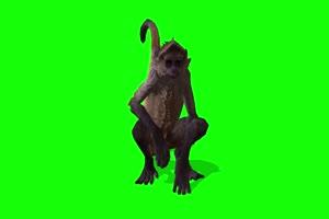 猴子 特效牛 绿幕素材 抠像视频 后期特效素材手机特效图片
