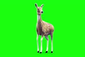 小鹿绿幕素材 绿幕视频手机特效图片