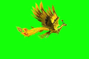 凤凰侧飞 绿幕抠像 视频素材 巧影AE 剪映特效 手手机特效图片
